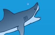 Aç Köpekbalığı