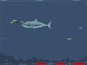 Dalgıç Yiyen Köpekbalığı