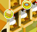 Tavuk Yetiştirme